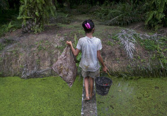 Palm Oil Ap 20363795798963 2000